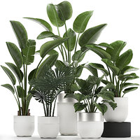 Houseplants in a white pot for the interior 721