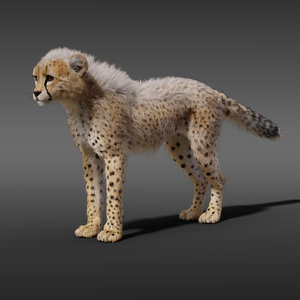 3D young cheetah fur