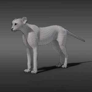 3D young cheetah
