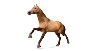3D realistic horse modeled animation model