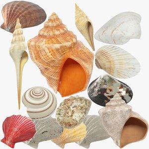 3D seashells v2 model