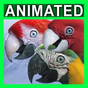 3D parrots rigged model