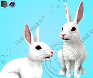 rodent rabbit mammal 3D model