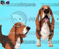 Dog Basset Hound Cartoon