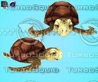 Cartoon  Turtles Sea