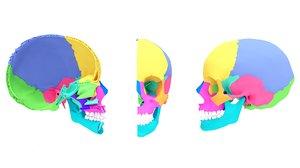 3D x-rays anatomy