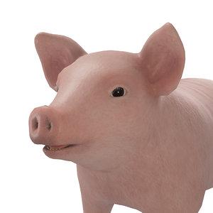 cute small pig model