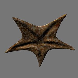 3D sea stars pentagrams creatures