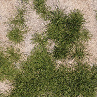 Polygonum Aviculare L