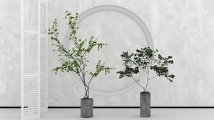 couple potted fruit trees 3D model