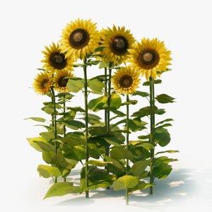 3D sunflower nature plants model