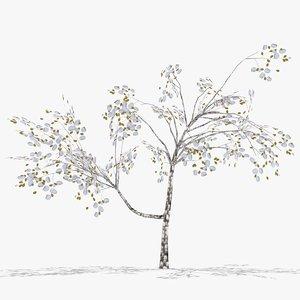 3D plum winter