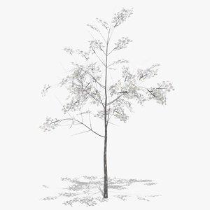 hawthorn winter 3D model