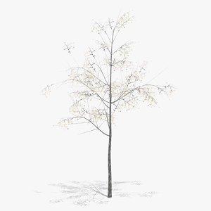 3D hawthorn winter model