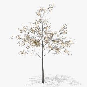 hawthorn autumn 3D model