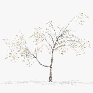 3D plum winter model
