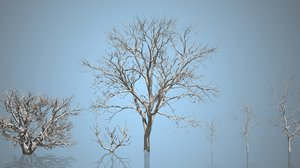 3D trees vol