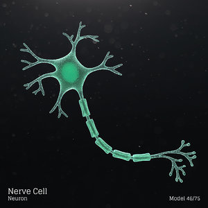 microbes bacteria cells 3D model