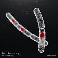 Food Poisoning - Bacillus Cereus