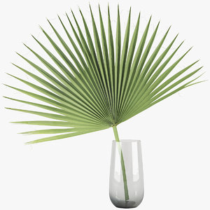 palm model
