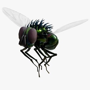 3D green fly loop animation
