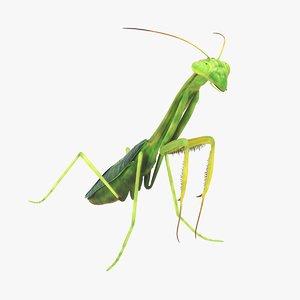 praying mantis model