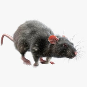 3D rat fur animations 3