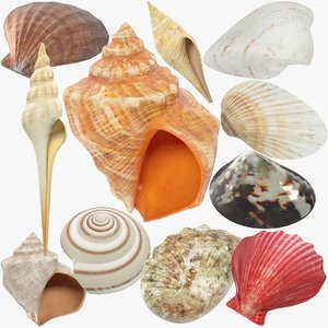seashells real sets 3D model