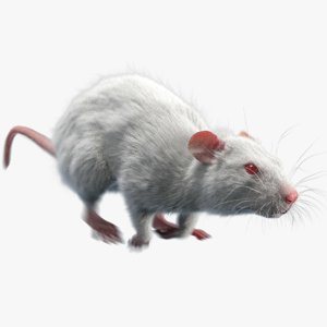rat fur animations 3D model