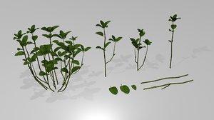 mentha spicata asset 3D