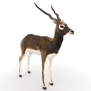 black buck blackbuck 3d model