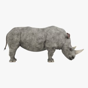 3D white rhinoceros