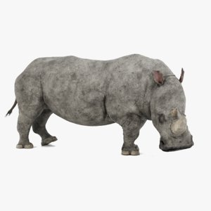 3D white rhinoceros rigged rhino model