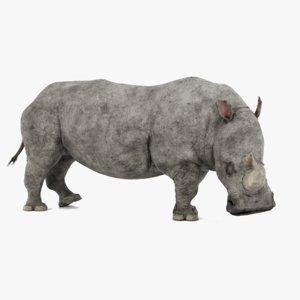 3D white rhinoceros rigged rhino model