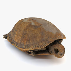 photogrammetry preserved turtle 3D model