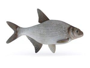 realistic bream fish 3D