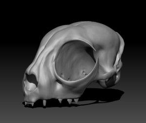 cat skull printing model