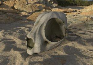 cat skull real 3D model