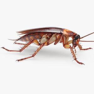 3D fur cockroach american model