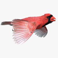Northern Cardinal(1)
