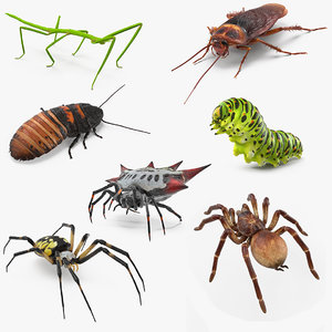 3D rigged creeping insects