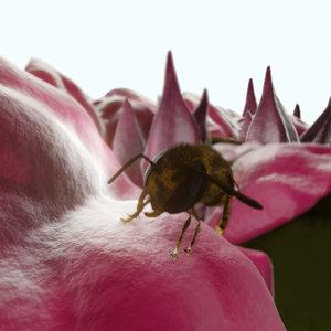 3D bouganville hornet