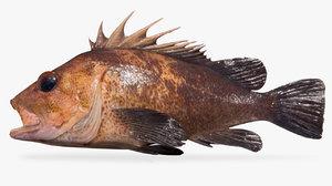 3D quillback rockfish variant