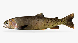 3D model yellowstone cutthroat trout
