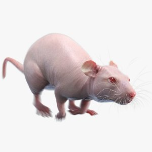 3D rat animations hair