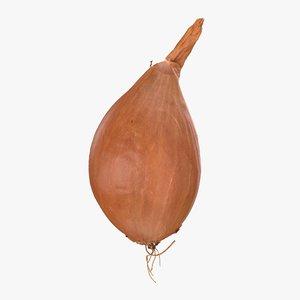 onion vegetable 3D model