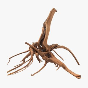 3D model tree root