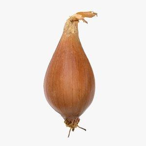 3D onion vegetable model