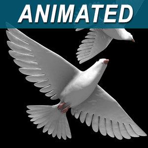white dove bird 3d model
