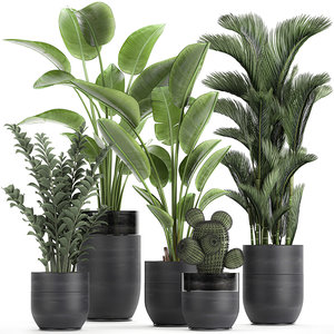 3D plants interior houseplants